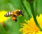 мед натуральный не дорого