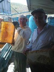 Продам пчел в Шымкенте 2015